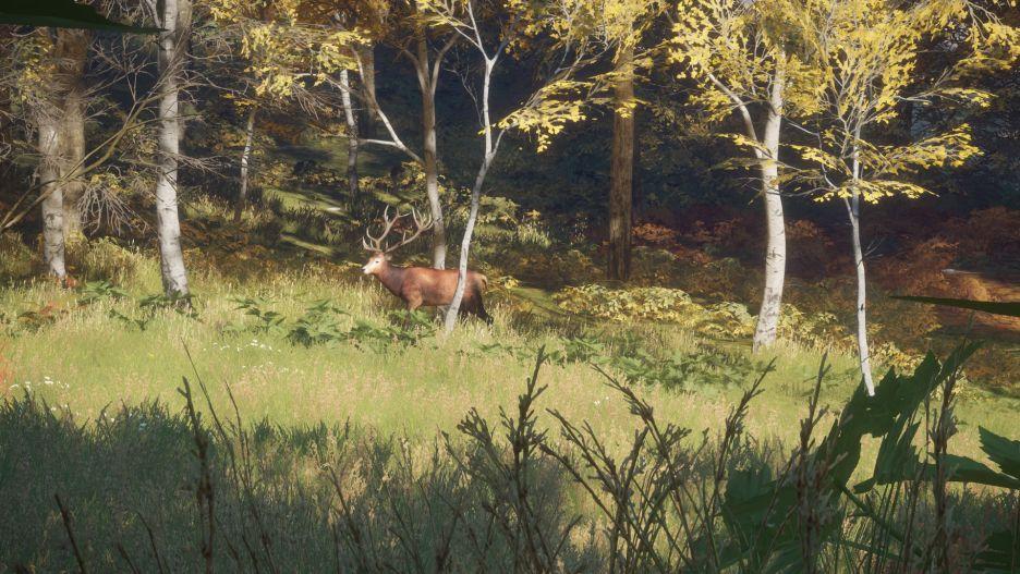 theHunter: Call of the Wild -  łowy w pięknych okolicznościach przyrody | zdjęcie 4