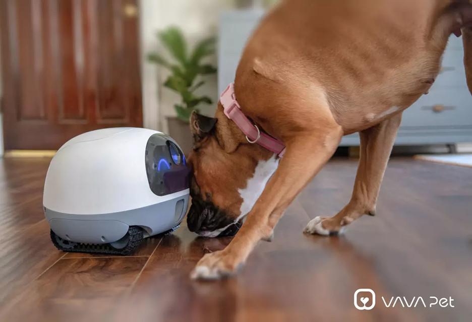 Ten robot przypilnuje zwierzaki zostawione w mieszkaniu