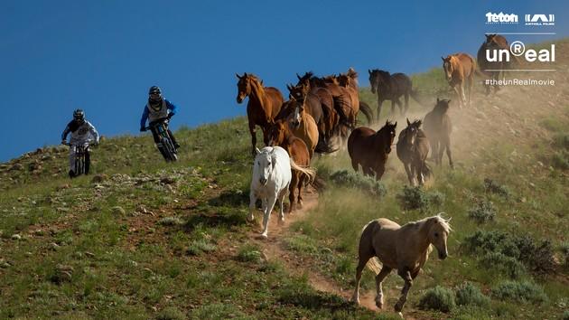 unReal konie