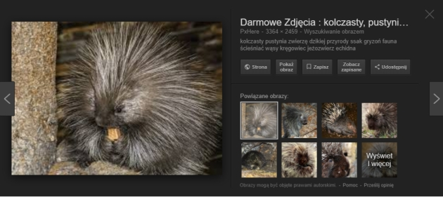 Google Images strona z podglądem obrazu