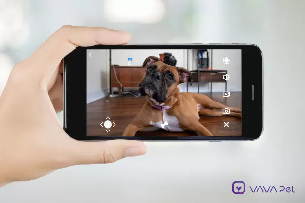 VAVA Pet app