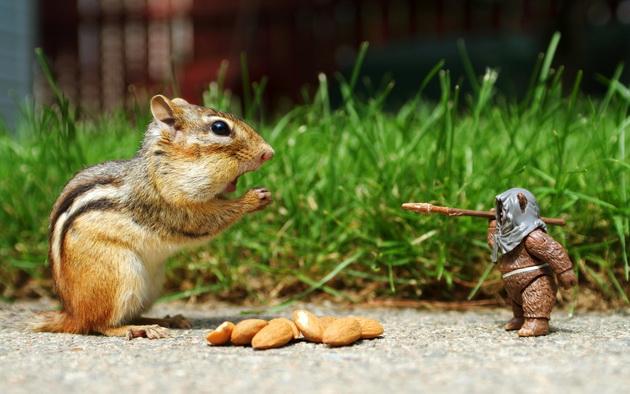 Gwiezdne Wojny - Ewok kontra wiewiórka