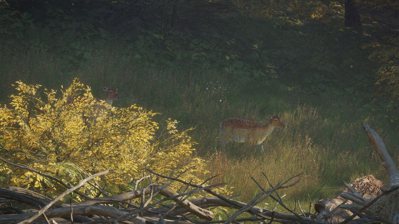 theHunter: Call of the Wild - sarny na polanie