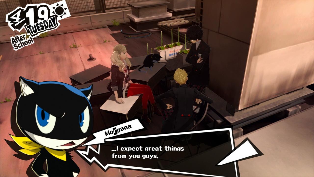 Persona 5 - rozmowa z kotem