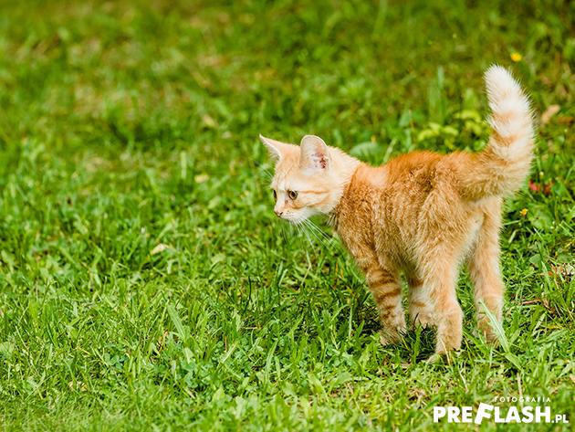 Kot zdjęcie
